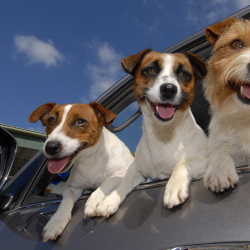 'Petiquette' Travel Tips For Dogs