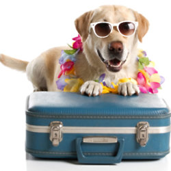 Your dog needs looking after when you're away
