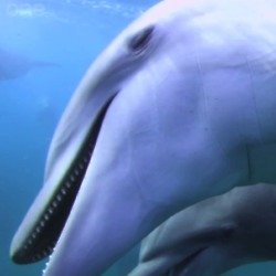 Dolphins get 'high' in the show / Credit: BBC