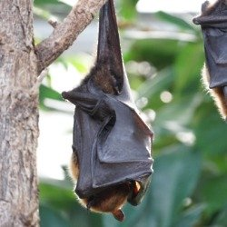 We find out what it means to dream about bats