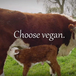 Choose vegan