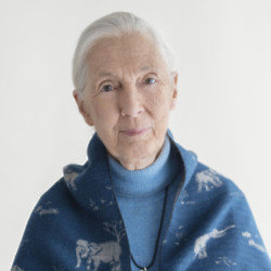 Jane Goodall (Photograph: Kieran E Scott)