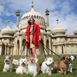 Take your dog to Brighton for a fun time away