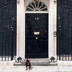 Could you trust a dog over David Cameron?