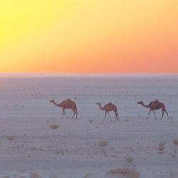 Oman Travel Guide