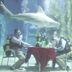 Tea with Sharks