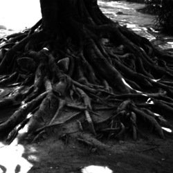We find out what it means to dream about roots