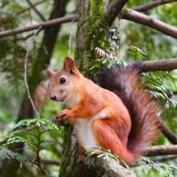 We find out what it means to dream about a squirrel