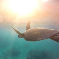We find out what it means to dream about a turtle