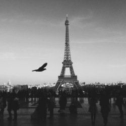 How can you best prepare for a trip to the city of love?