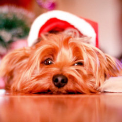 It's exhausting having to defend veganism at Christmas!