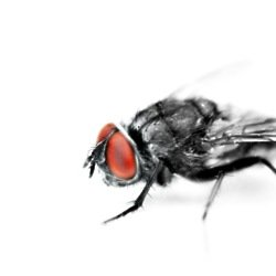 We find out what it means to dream about flies