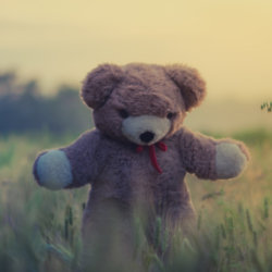 We find out what it means to dream about a teddy bear