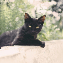 We find out what it means to dream about a black cat