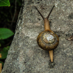 We find out what it means to dream about snails