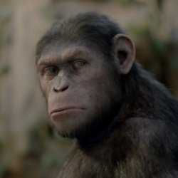 Caesar In Rise Of The Planet Of The Apes