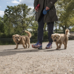 Treat your pooch to some more outings