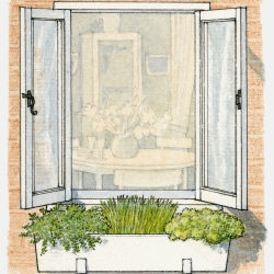 Winter garden: herbs for window boxes in the cold