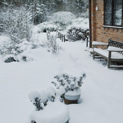 Keep your garden health in the winter months
