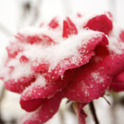 Do you know which plants will bloom through winter?