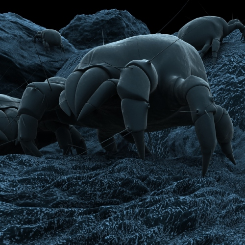 Dust mites love to breed in between the sheets